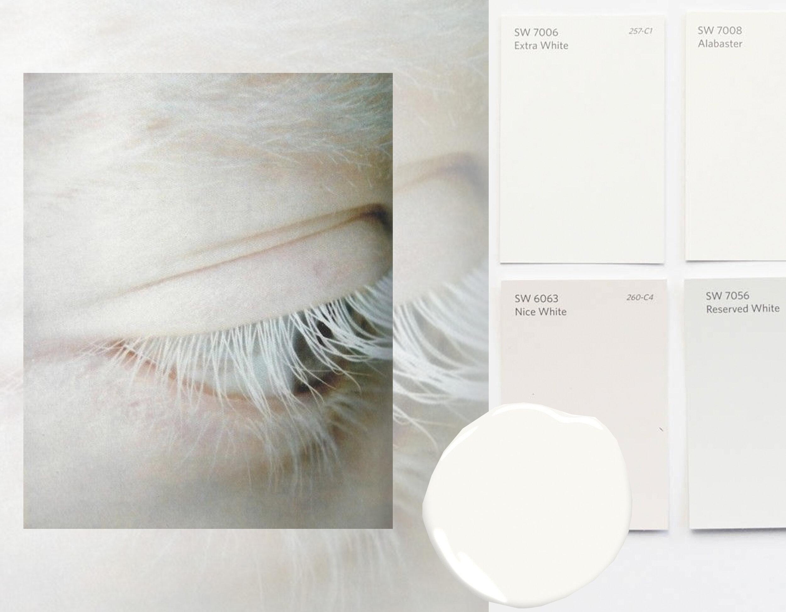 image eye via  WGSN  - paint swatches  Sherwin-Williams  via  Vintage Revivals  - Simply White  Benjamin Moore
