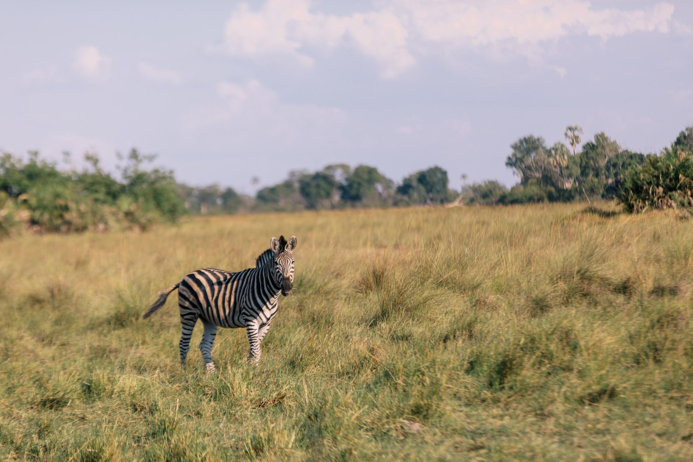 africansafari-1.JPG