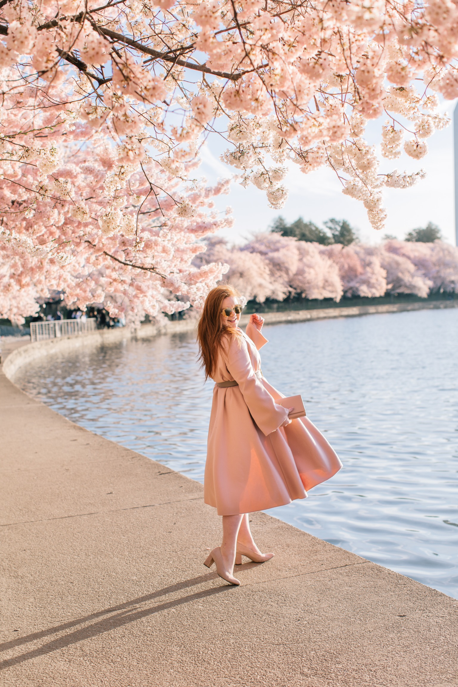 dc_cherry_blossoms-5.JPG