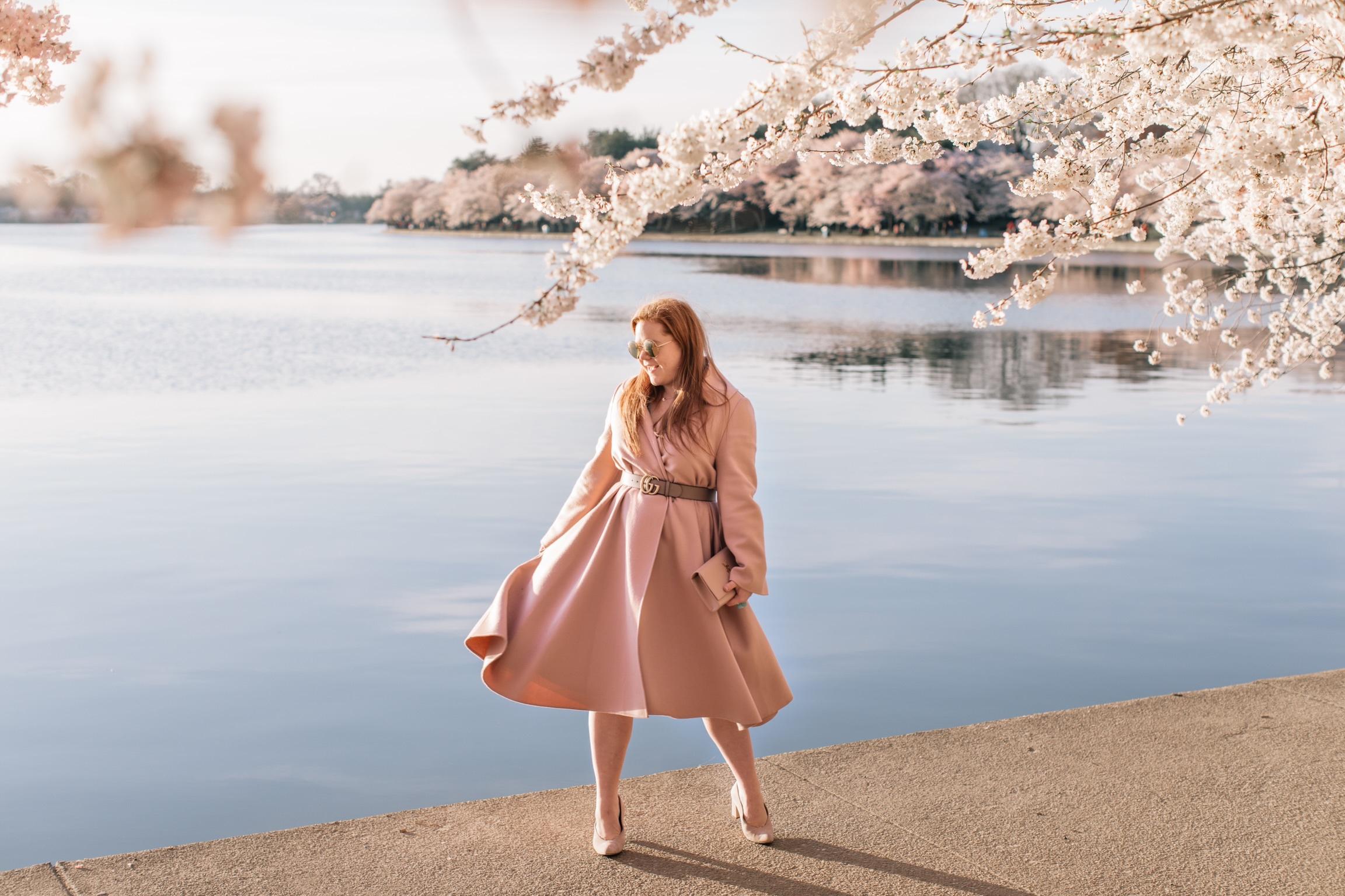dc_cherry_blossoms-1.JPG