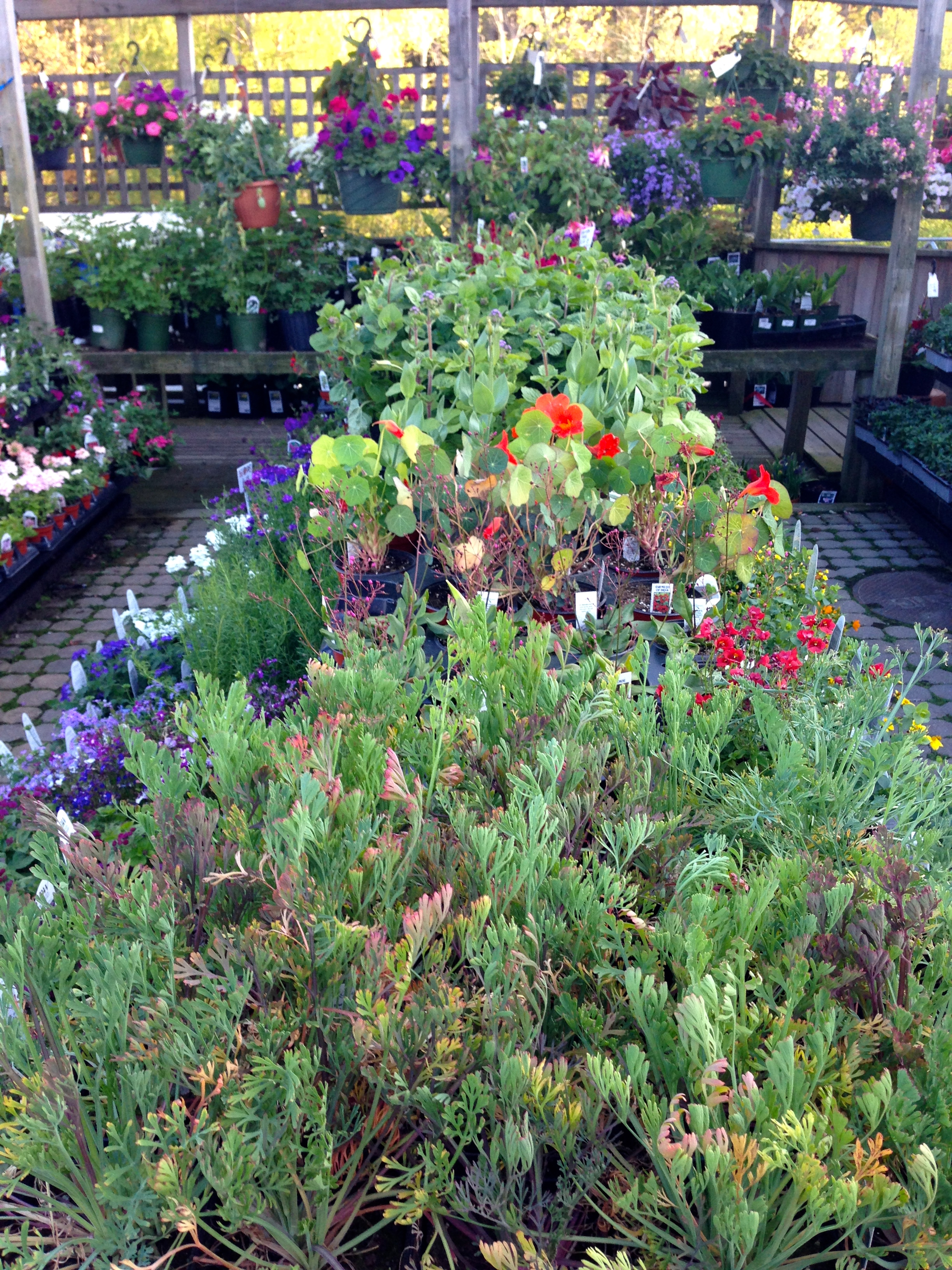 Hard-to-find annuals and old-time favorites cover our tables from top to bottom. Many of our annuals and perennials are hand-selected by our staff, and come straight from the farm to our garden center.