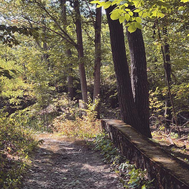 #walkinthewoods