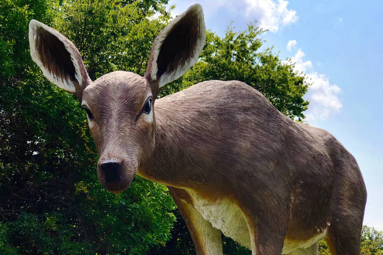 tony-tasset-deer