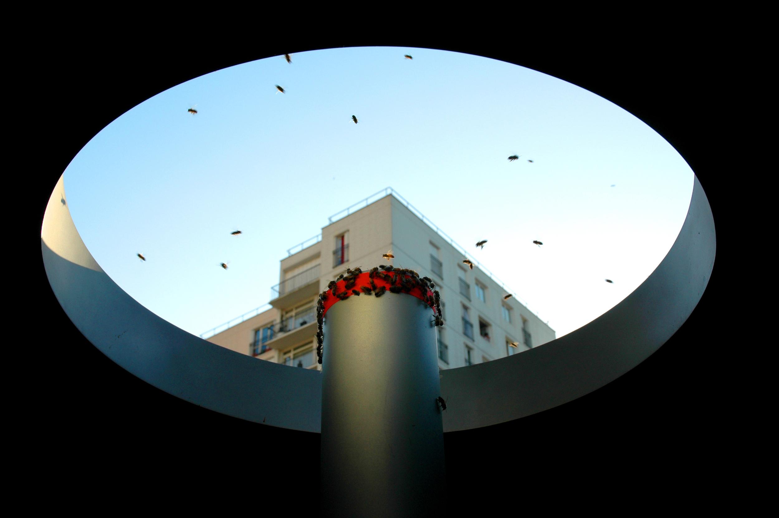 Sortie Du Pollinisateur Urbain Noisy    ©Oliver Darné
