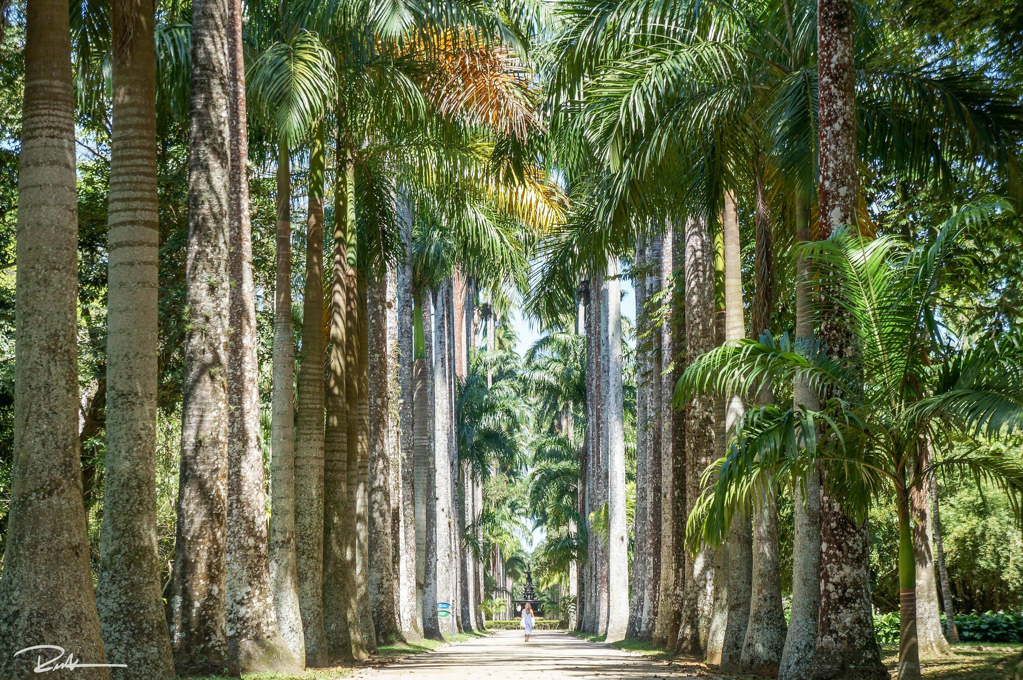 Jardim Botanico's main walkway