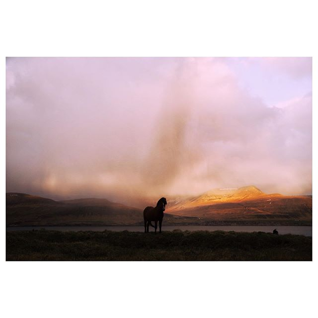 80% of my Iceland photos are horses...