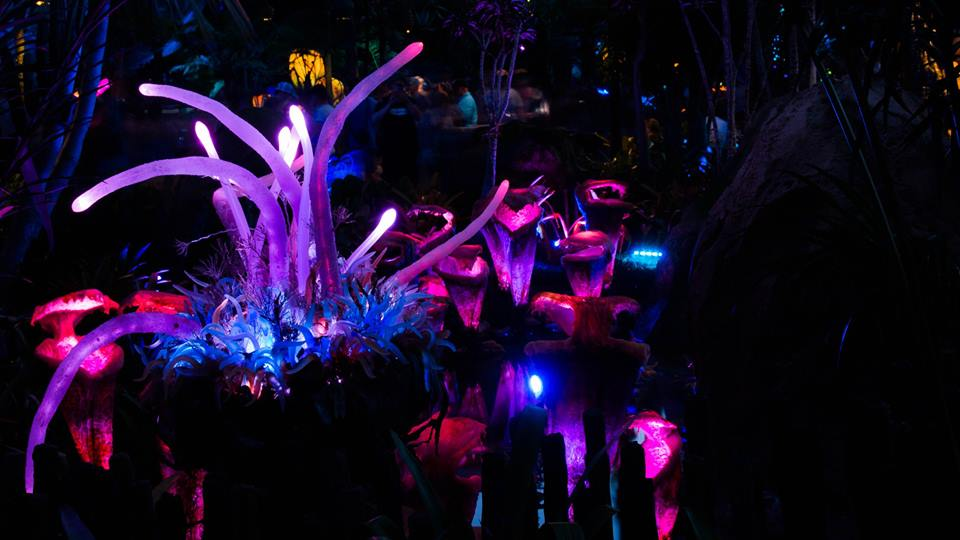 Pandora at night