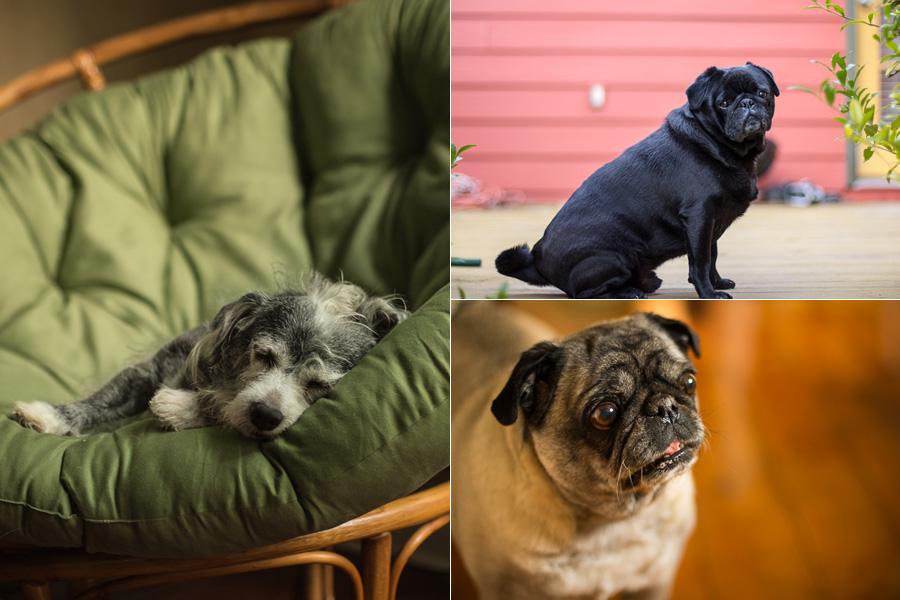 bobozeman-more-dogs.jpg