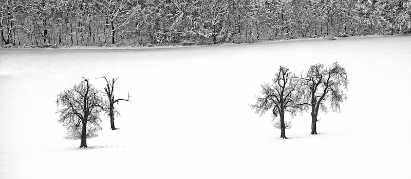 """""""Four Trees"""" by Tony Thomas - C"""