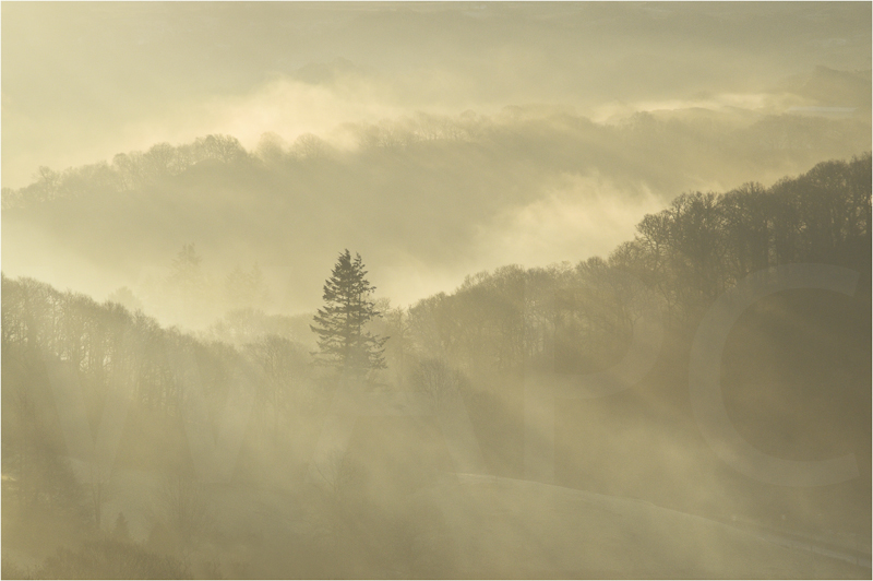 """""""Trees in the Mist"""" by Sue Baker - C"""