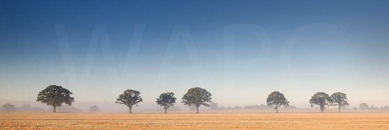 Misty Morning by Jeremy Smith - HC