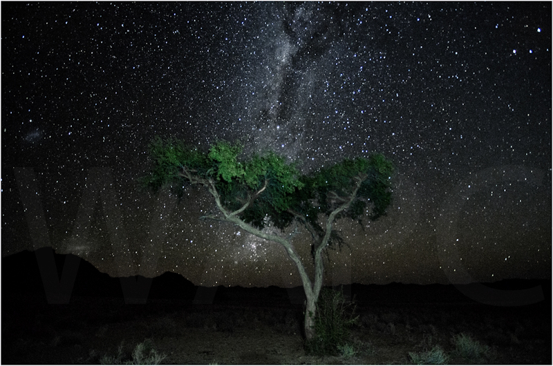 Starry Starry Night by Russell Price - C
