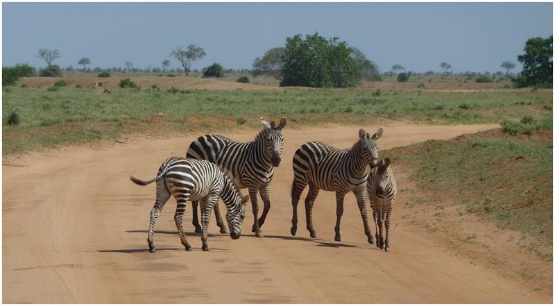 Zebra Crossing by David Prestwood - HC
