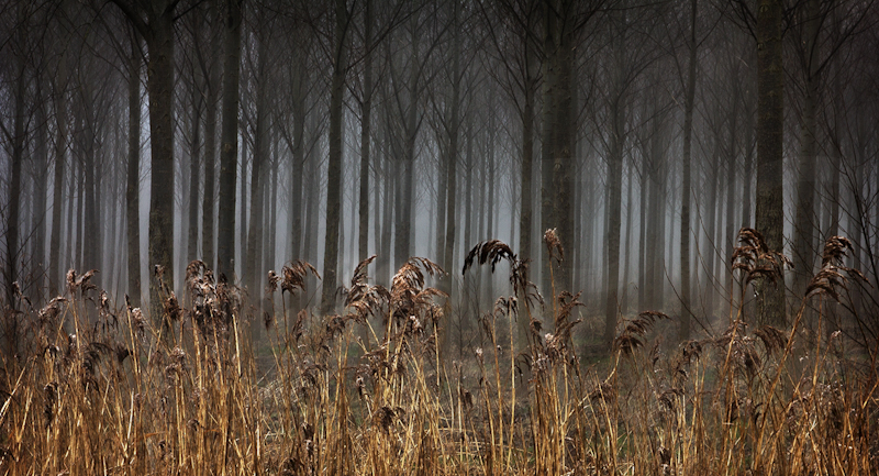 Reeds and Trees by Jeremy Smith-First