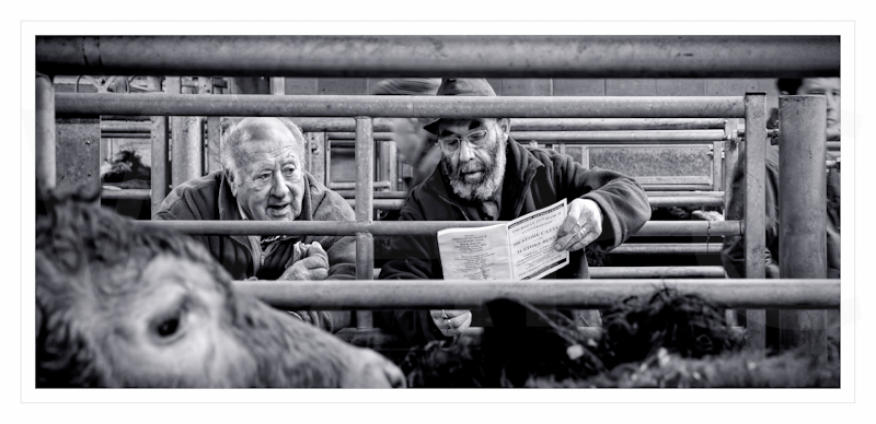 """""""Viewing the stock"""" by Calvin Downes (A-mp)"""