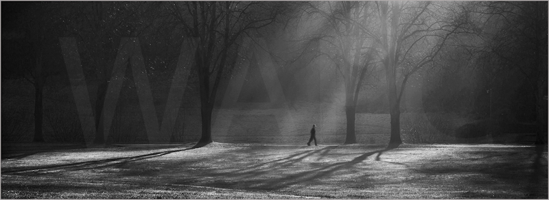 A Walk in the Park by Janet Griffiths