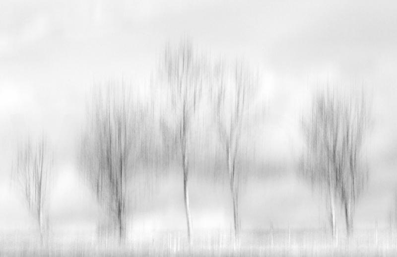 Frieze by Irene Froy