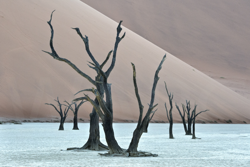 Dunes and Trees by Audrey Price - C (Adv)