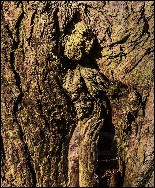 Woman of the Wood by Ian Griffiths - C (Int col)