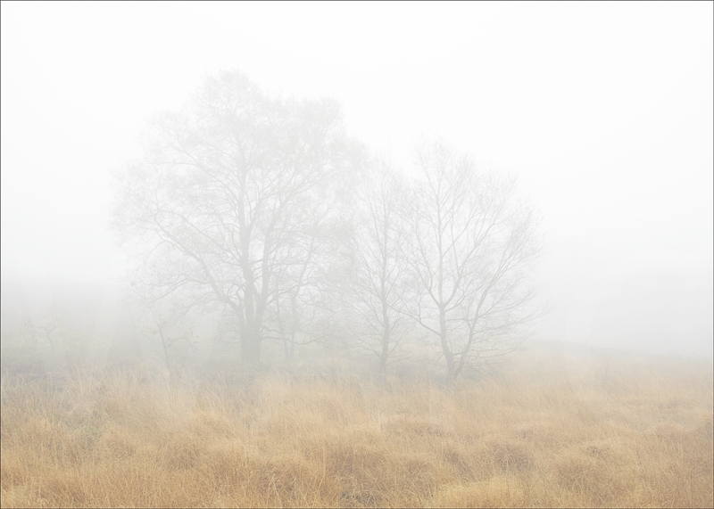 Trees in the Mist by Tony Thomas - C (adv col)