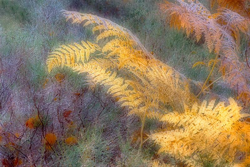 Autumn Brackens