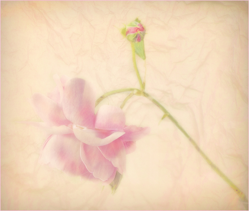 Bud and Bloom by Audrey Price - C (Adv)