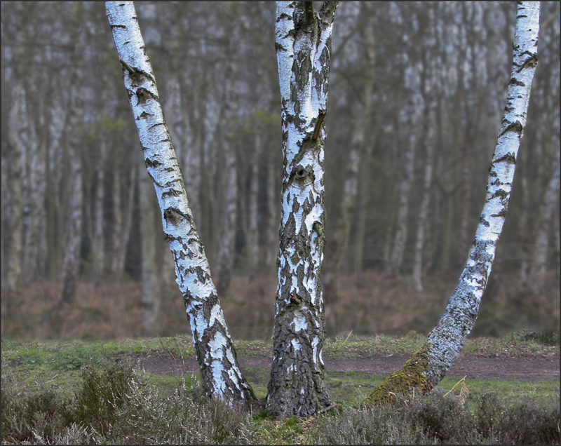 Silver Birches, Highgate by Peter Hodgkison - 2nd (Int)