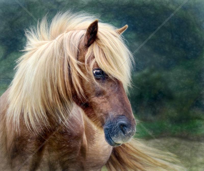 Hair by Sassoon