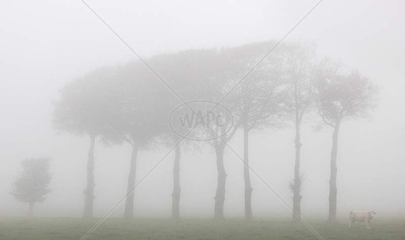 Foggy Day on the Farm by Irene Froy - 2nd (Adv col)