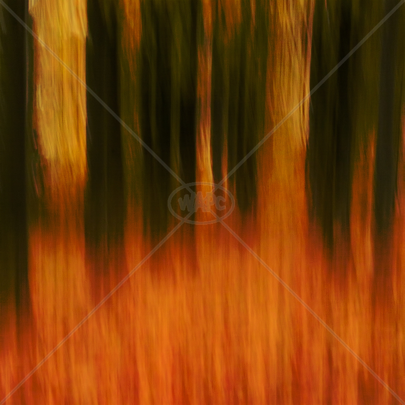 Flaming Autumn by Norman O'Neill - C (Adv col)