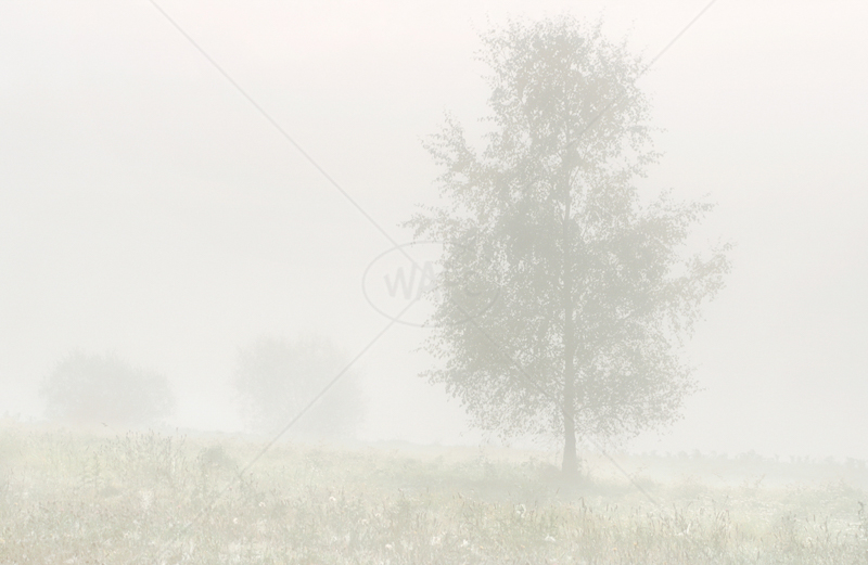 Misty Morning by Irene Froy - C (Print)