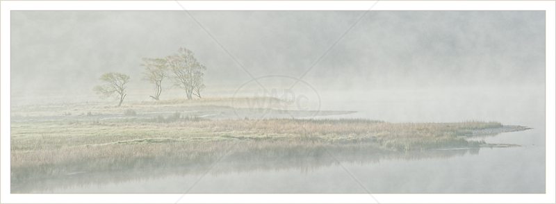 Tree's and Mist by Audrey Price - 2nd (Print)