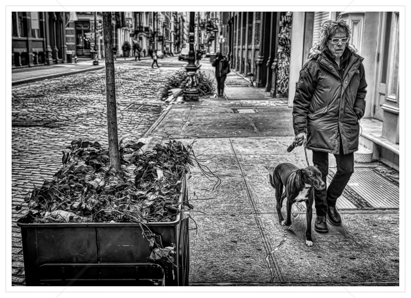 New York Dog Walking by Calvin Downes - C (Adv mono)