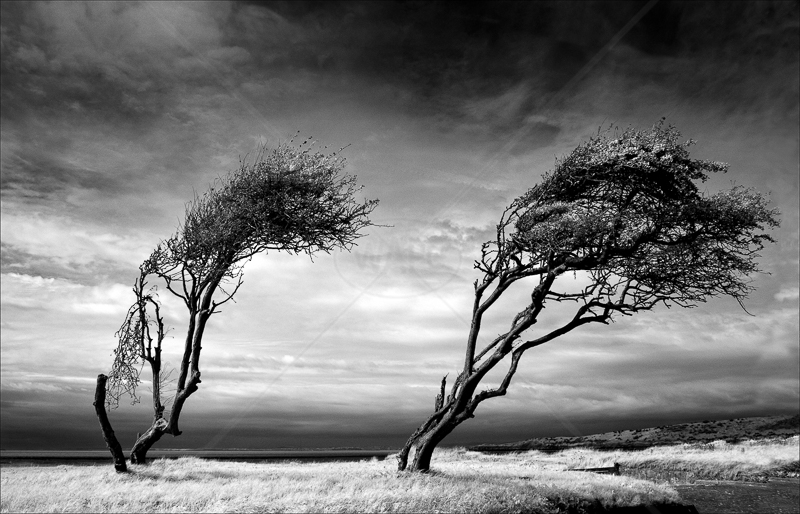 Shoreline Trees by Tony Thomas - 3rd (Adv mono)