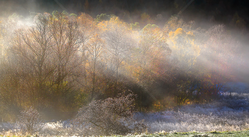 Frosty Autumn Morning by Norman O'Neill - Print - C