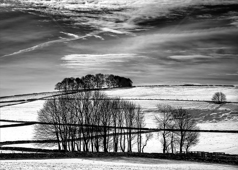 Derbyshire Trees in Winter by Tony Thomas - PDI - C