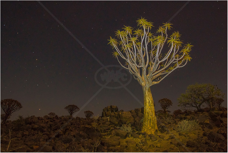 Quiver Tree Forest by Alan Lees - PDI - 2nd