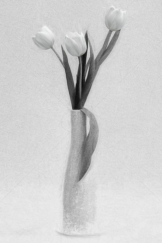 Simply Tulips by Norman O'Neill - ADV MONO - 2nd