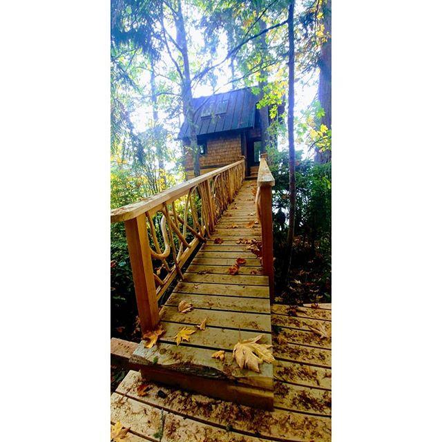 #invitation #treehouse #natural #elevate #nextlevel #heygoodlookin