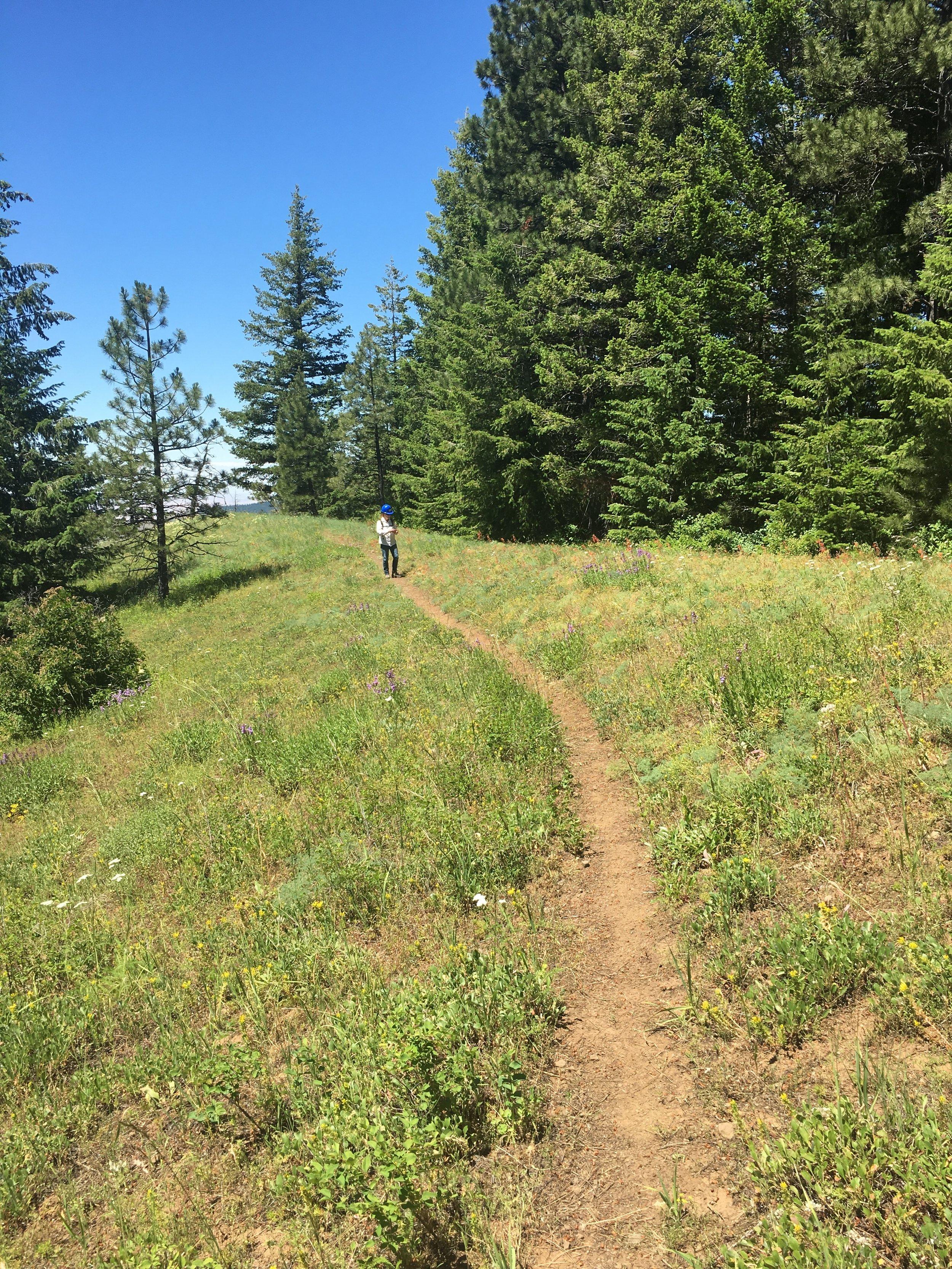 Tiger Ridge trail.JPG