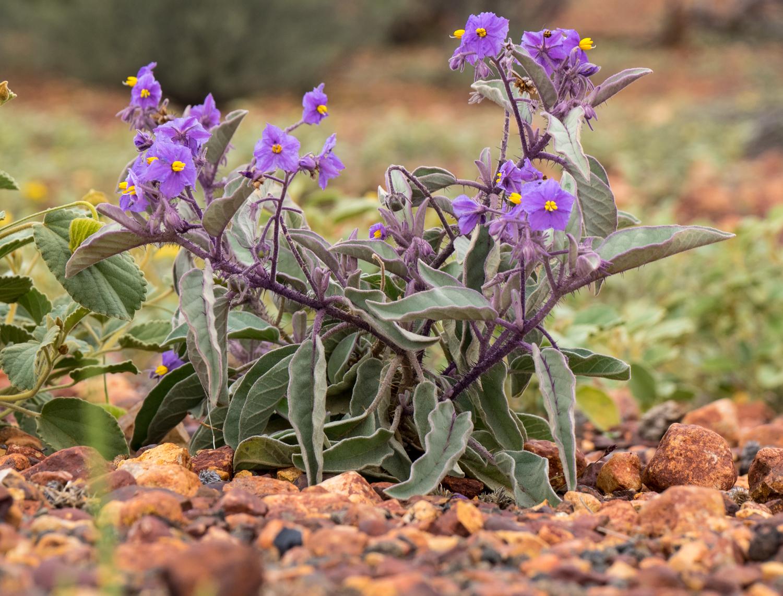 LONR - Outback Qld-7.jpg