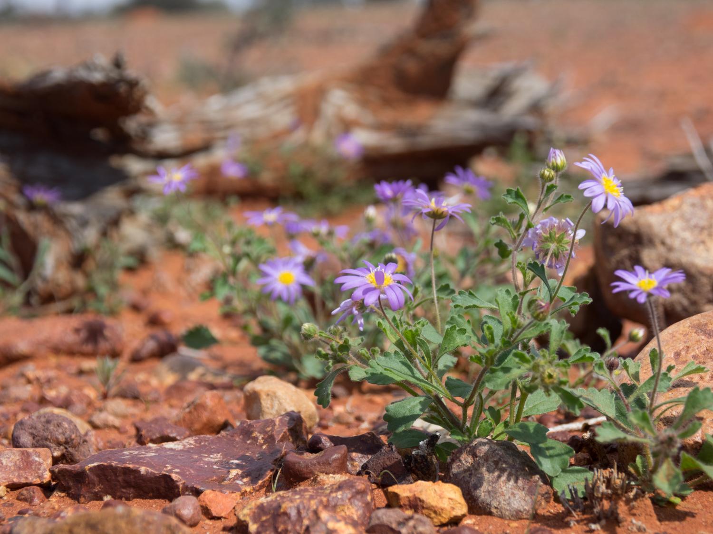 LONR - Outback Qld-17.jpg