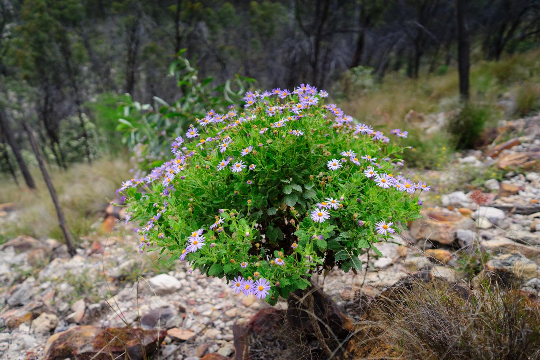 LONR - Outback Qld-74.jpg