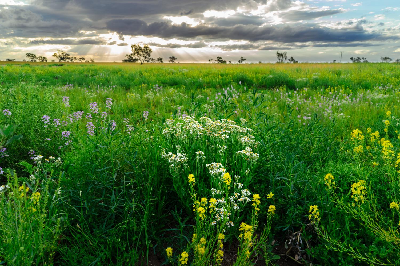 LONR - Outback Qld-96.jpg