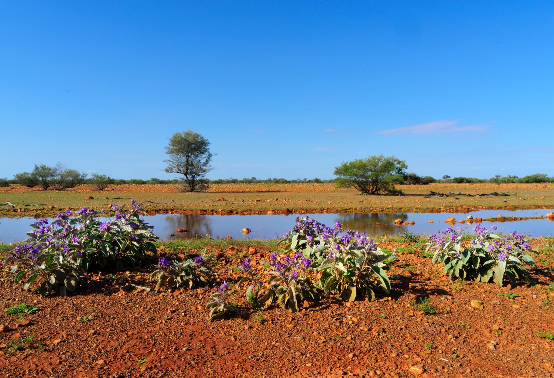 LONR - Outback Qld-100.jpg