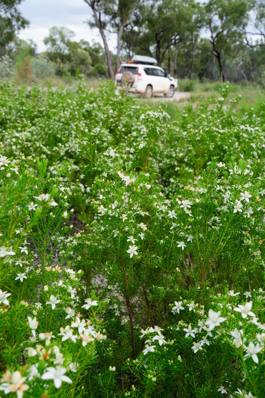 LONR - Outback Qld-73.jpg