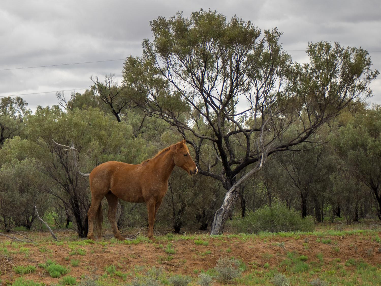LONR - Outback Qld-5.jpg
