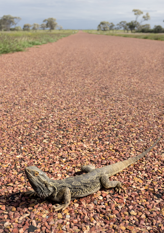 LONR - Outback Qld-79.jpg