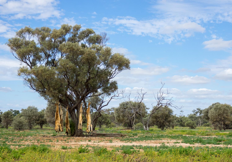 LONR - Outback Qld-78.jpg