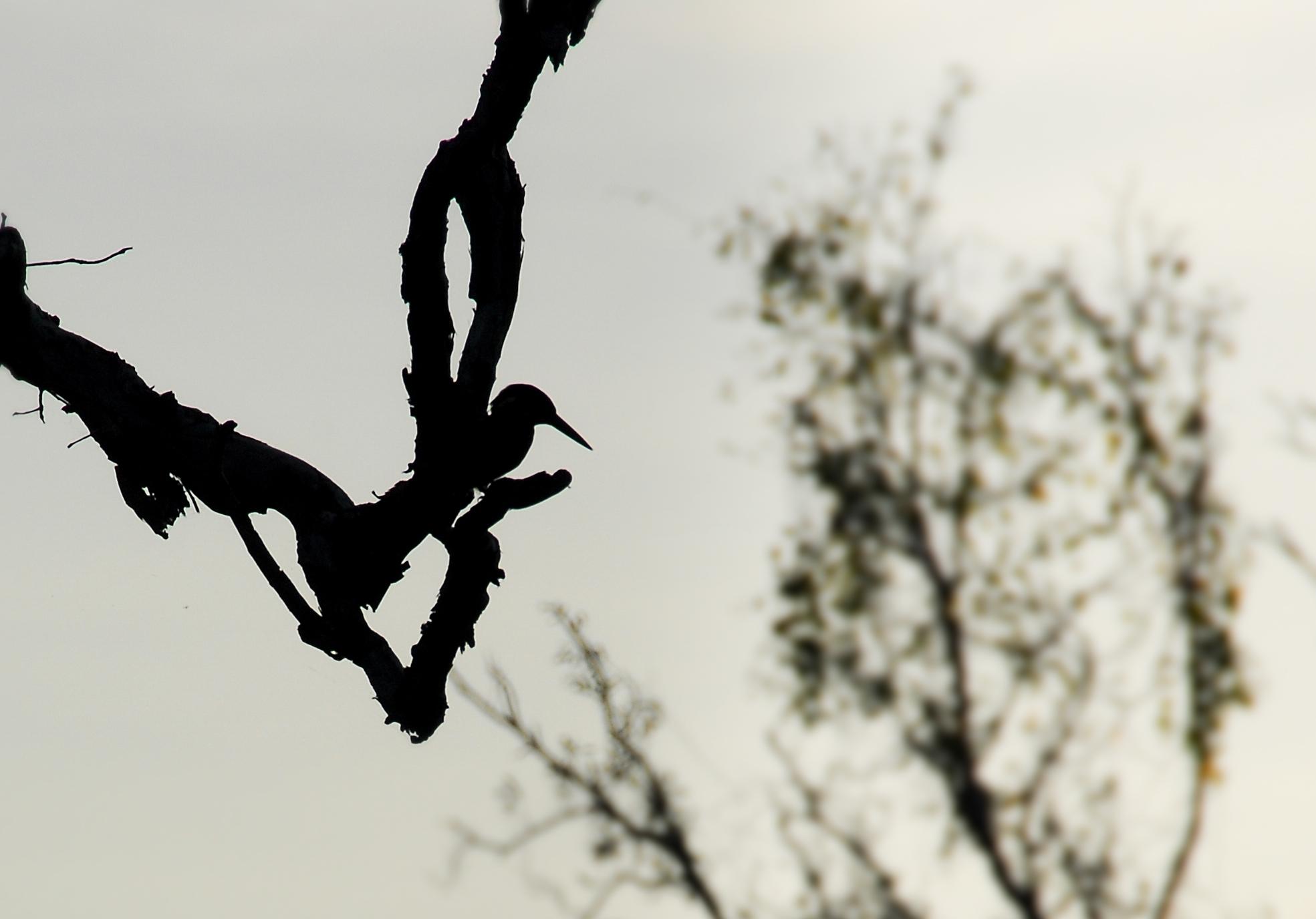Cape York-wildlife2.jpg